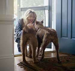 Being greeted at the door by your dog is great for your emotional health, making you feel like the most important person in the world. It does wonders for the ego too!