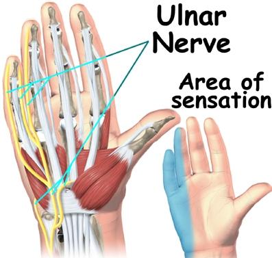 Ulnar-Nerve-Hand